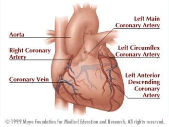 heart coronary arteries diagram : cardiac arteries diagram - findchart.co