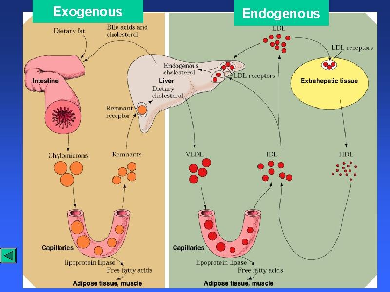 Background Of Cholesterol Risk Factors